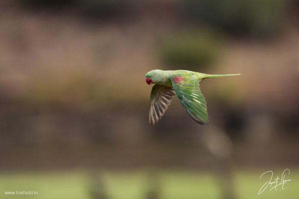 alex parakeet