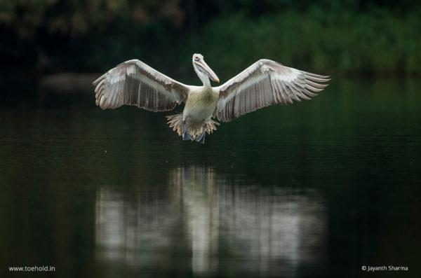 pelican landing 1