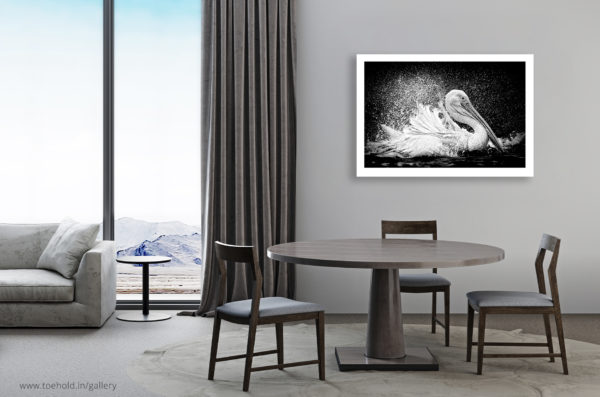 Great White Pelican Frame