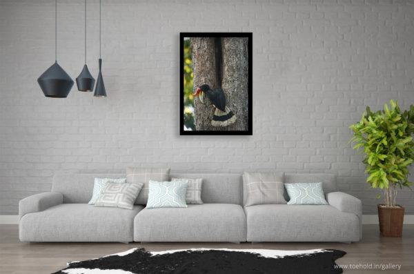 Rhino Hornbill Frame