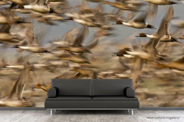 Pintail Flock Wallpaper