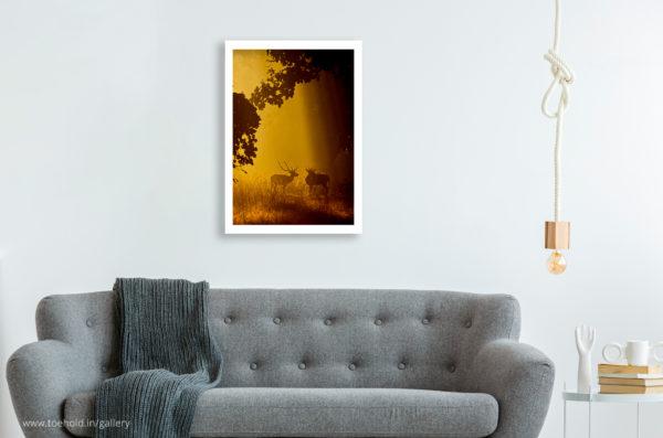 Spotlight Chital Frame