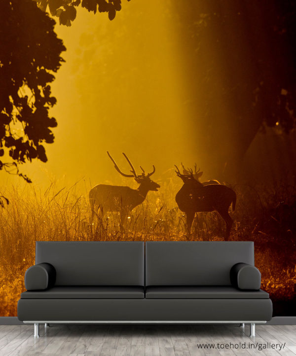 SpotLight Chital Wallpaper