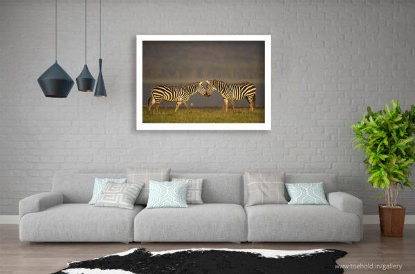 Zebras Aafrica Frame