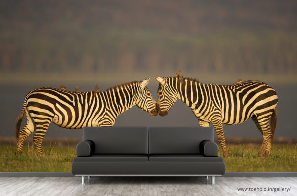 Zebras Africa Wallpaper