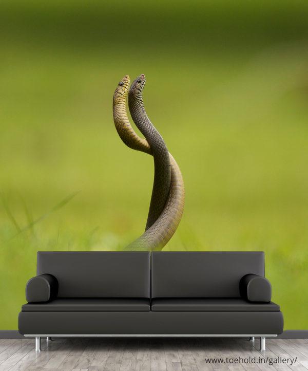 Snake Combat Wallpaper