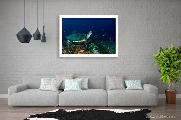 sea green turtle frame