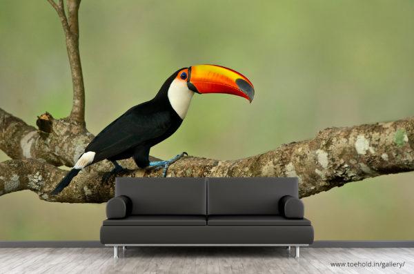 toco toucan wallpaper