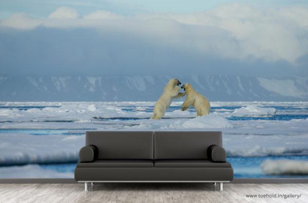 polar bear play fight wallpaper