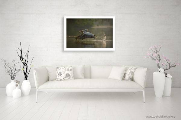 Pelican Takeoff Ranganathittu Frame