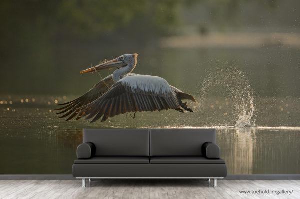 Pelican Takeoff Ranganathittu Wallpaper