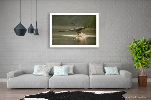 Pelican Flight Ranganathittu Frame
