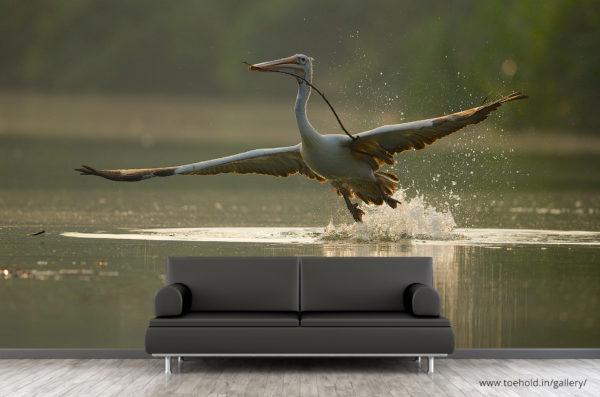 Pelican Flight Ranganthittu Wallpaper