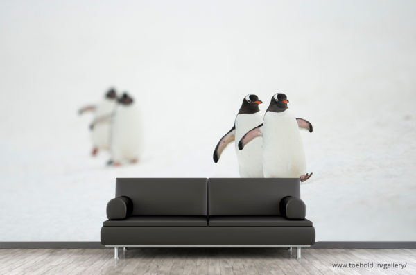 Gentoo Penguins Wallpaper