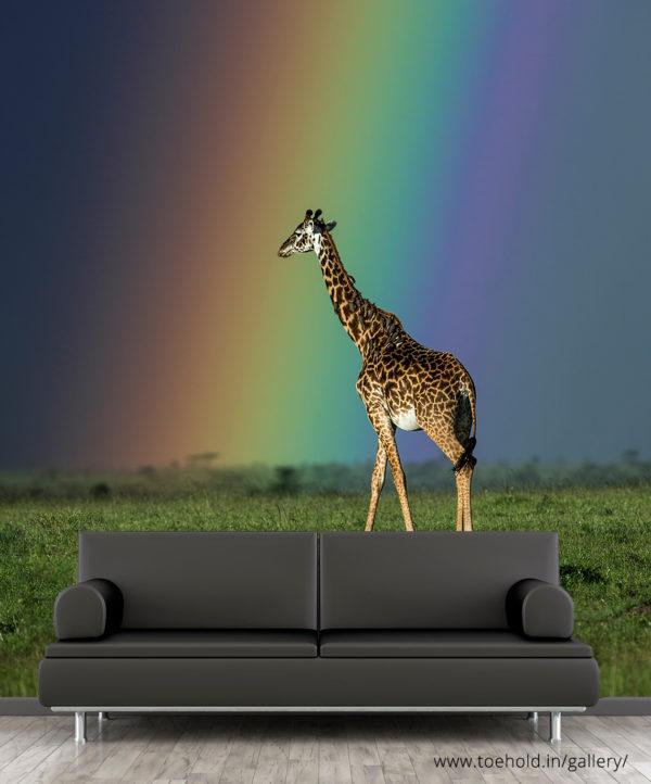 giraffe against a rainbow africa wallpaper