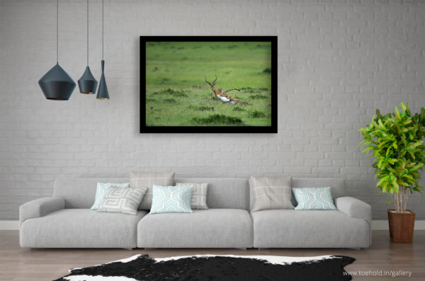 cheetah kill africa frame