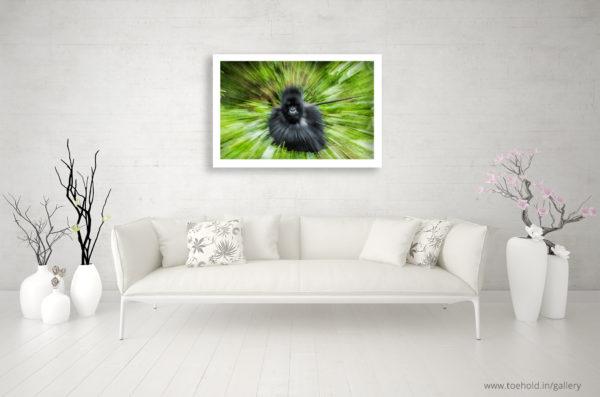 mountain gorilla frame