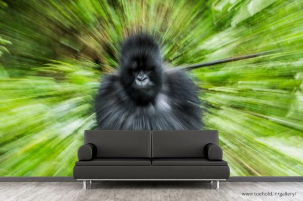 mountain gorilla wallpaper