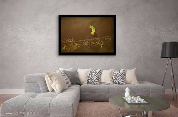 keel billed toucan frame