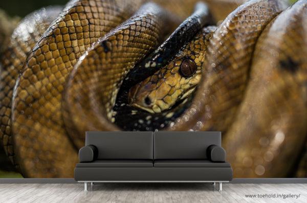 boa constrictor snake wallpaper