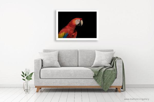 macaw frame