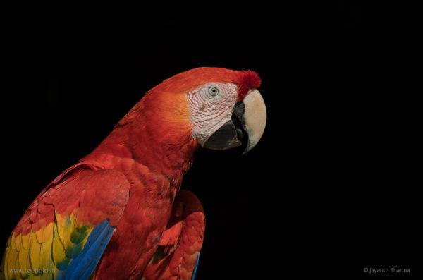 macaw web