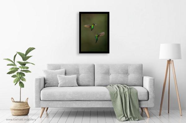 fiery throated hummingbird frame