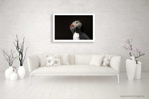 puffin frame