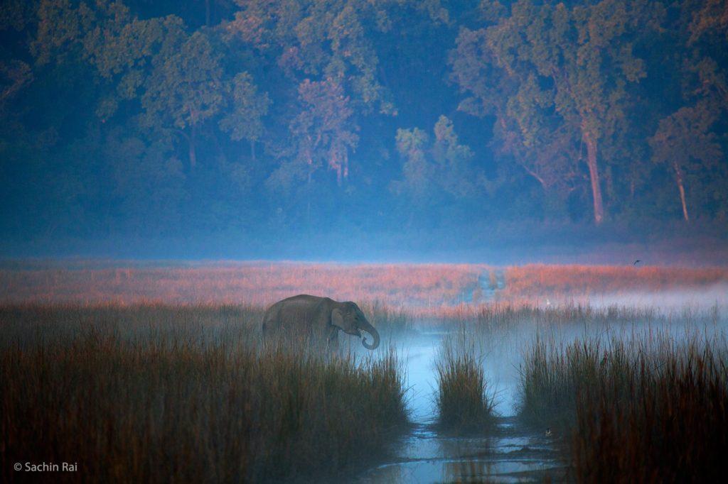 Corbett_Elephant_Scape_Sachin_Rai