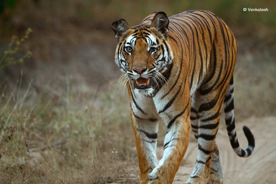© Venkatesh Srinivasan
