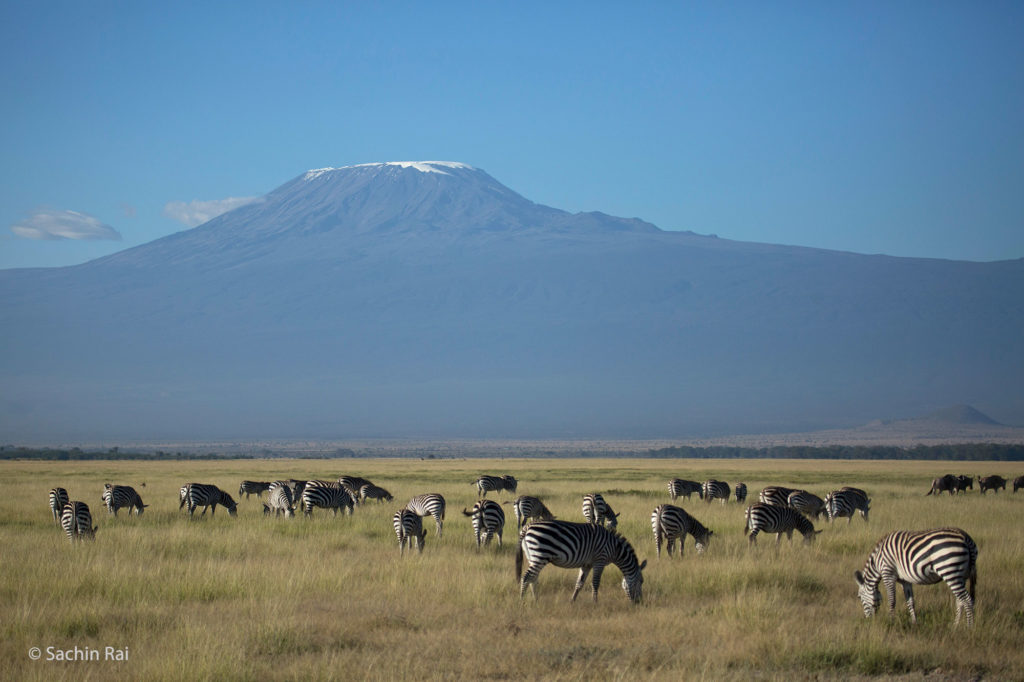 Zebras and Kilimanjaro, Amboseli