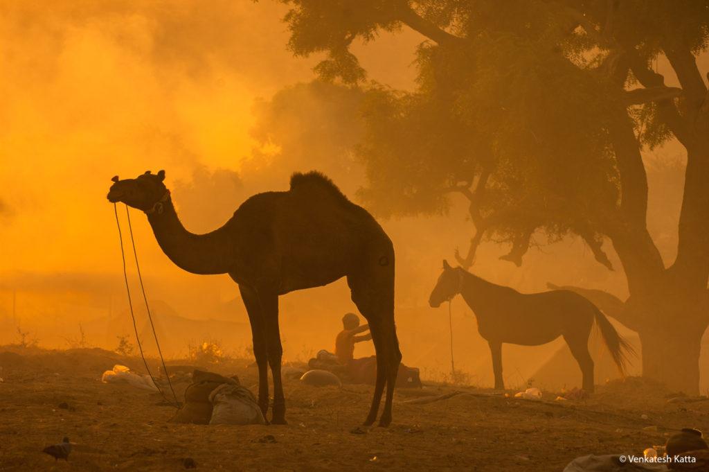 Pushkar Morning