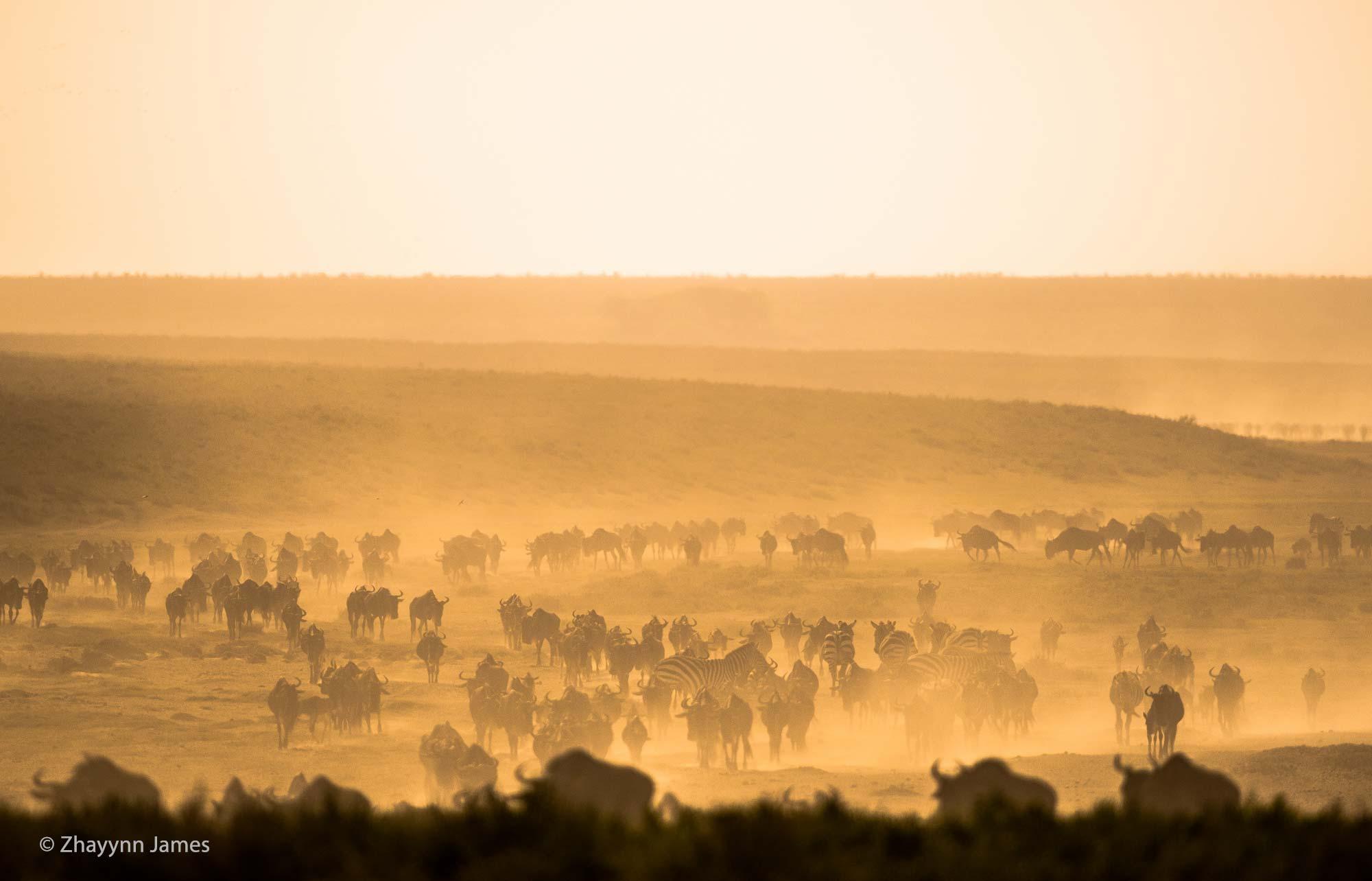 Serengeti Scape
