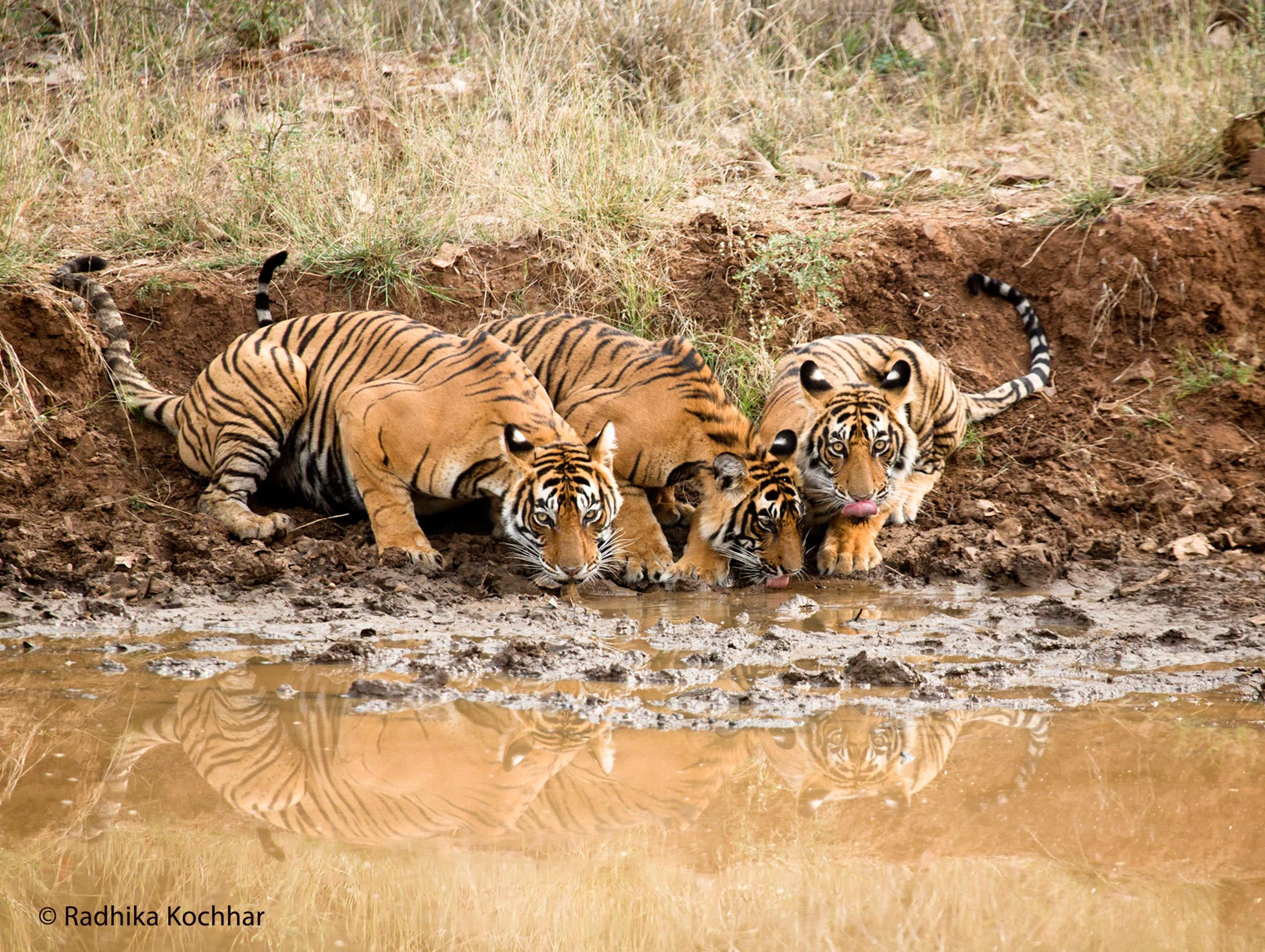 Noor and Cubs