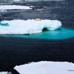 Polar Bear Scape, Svalbard