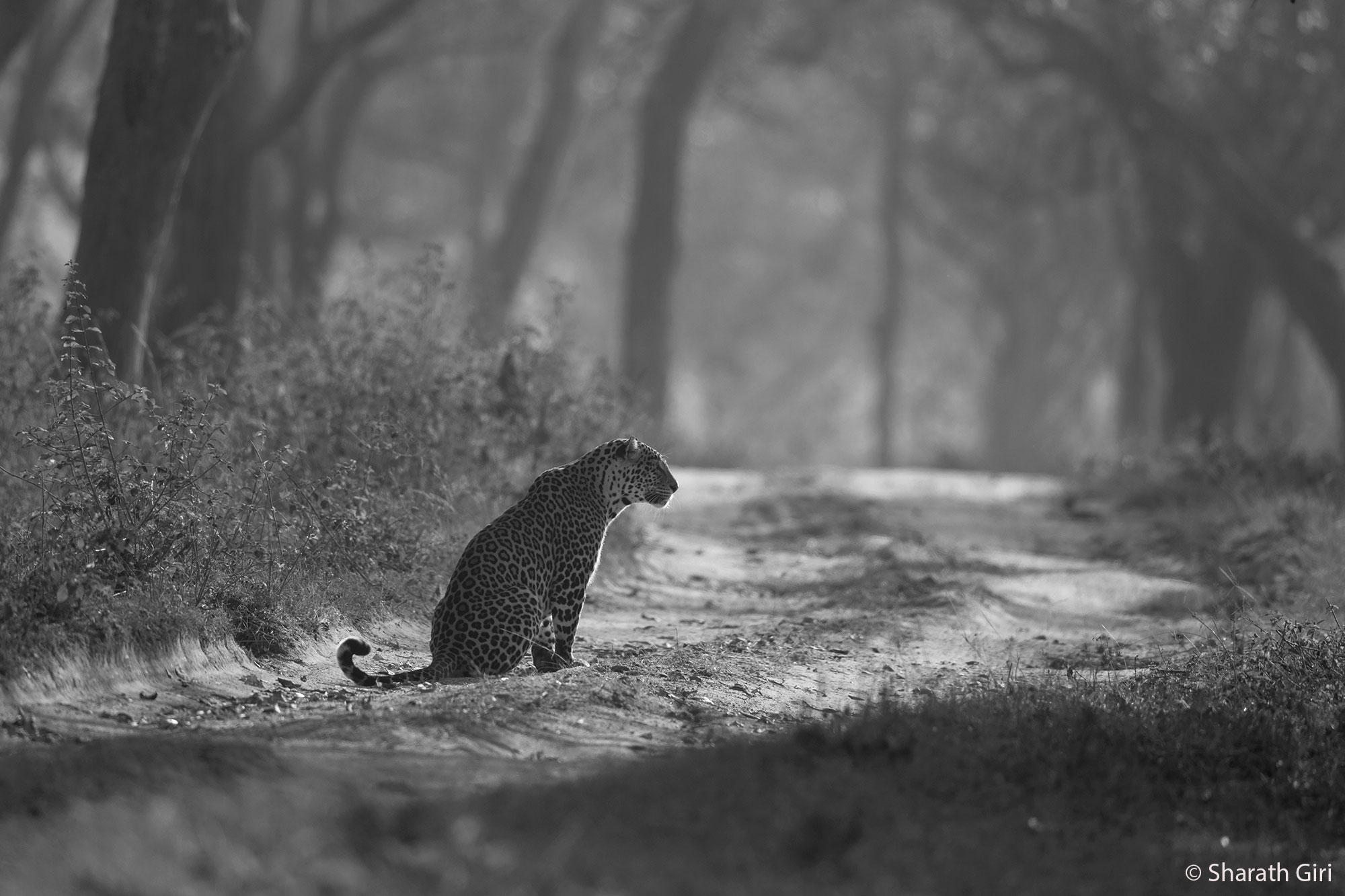 © Sharath Giri