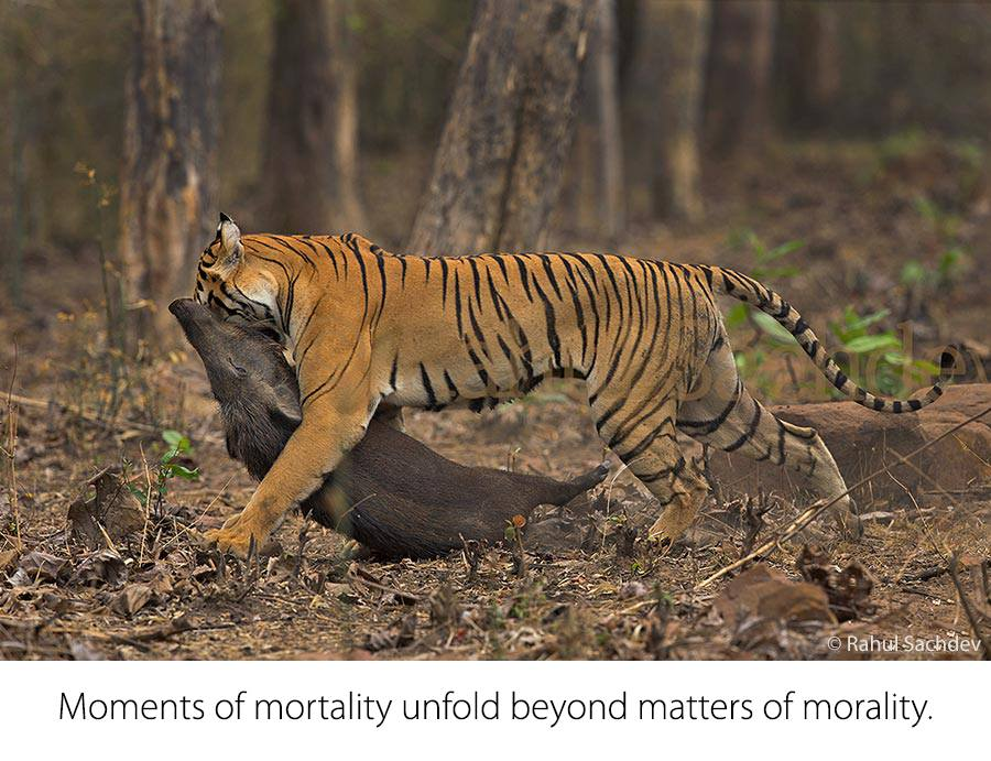 © Rahul Sachdev