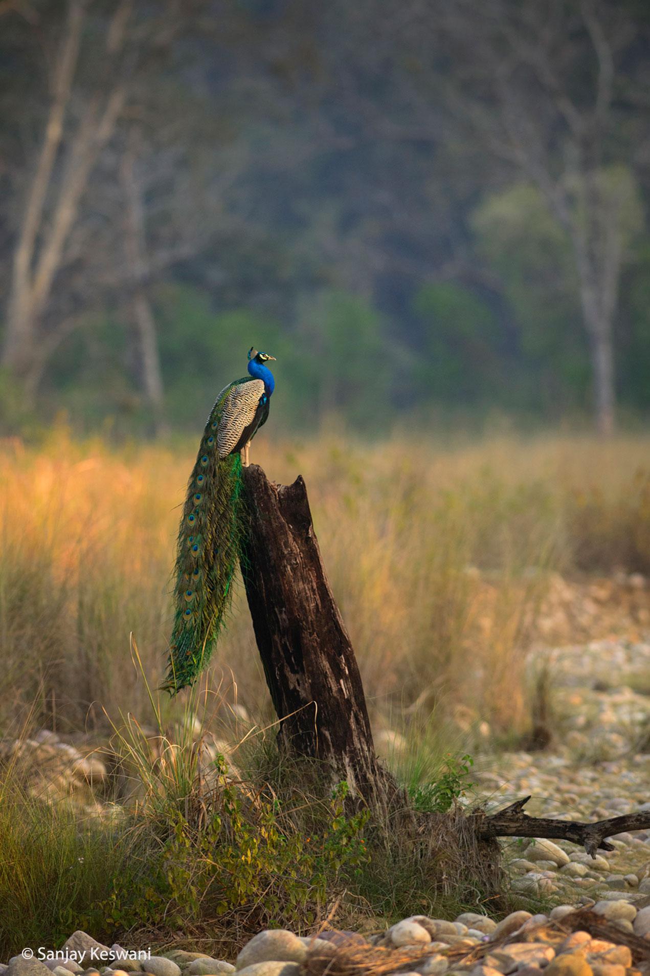 © Sanjay Keswani