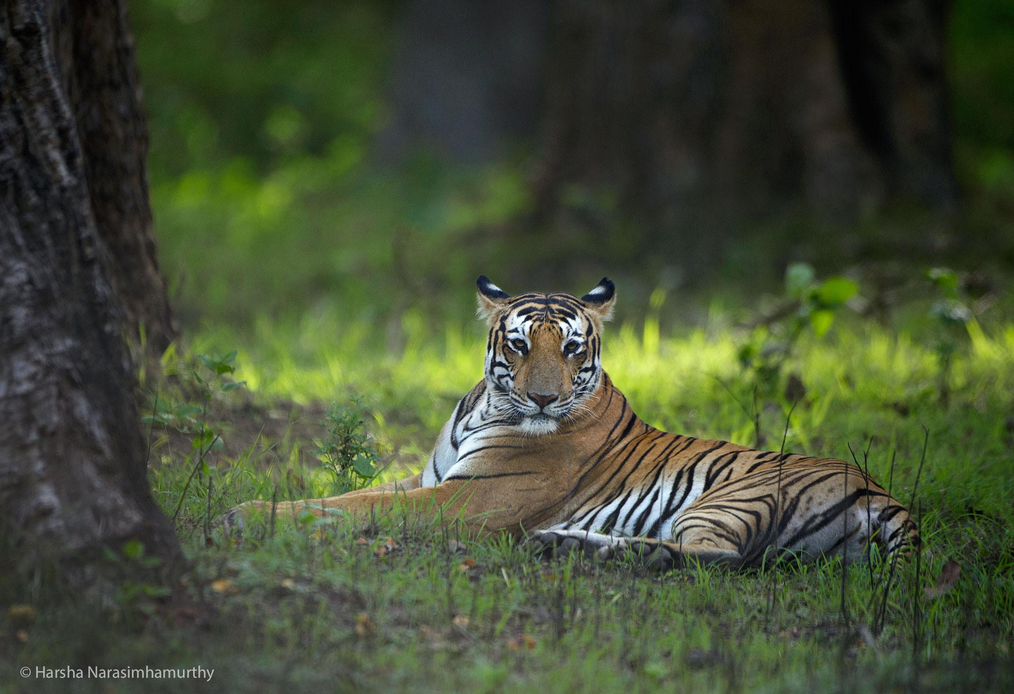 © Harsha Narasimhamurthy
