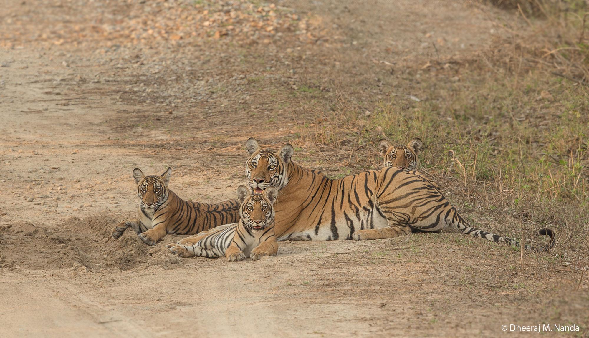 © Dheeraj M. Nanda