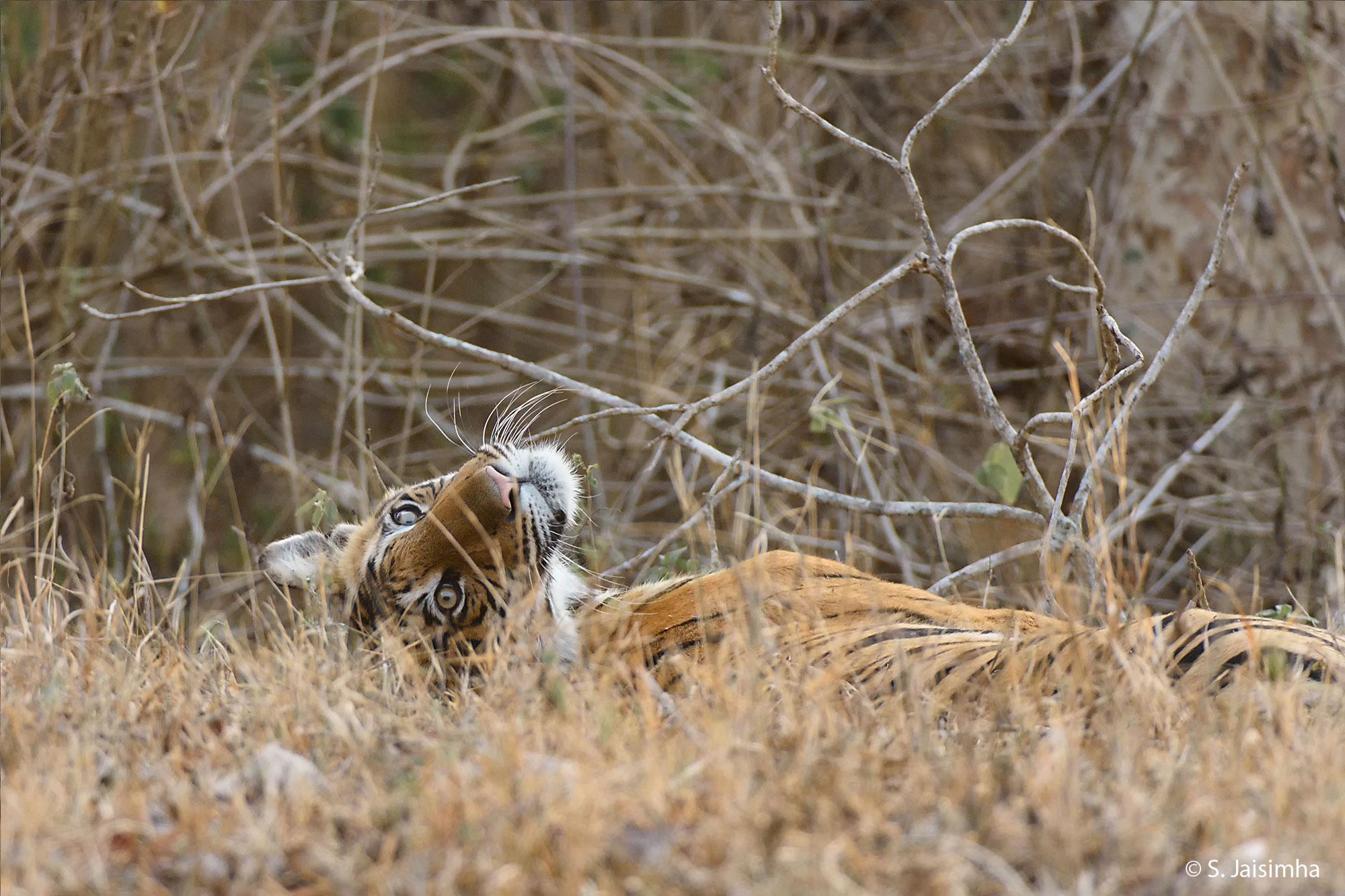 Kabini Wildlife Photography Tour