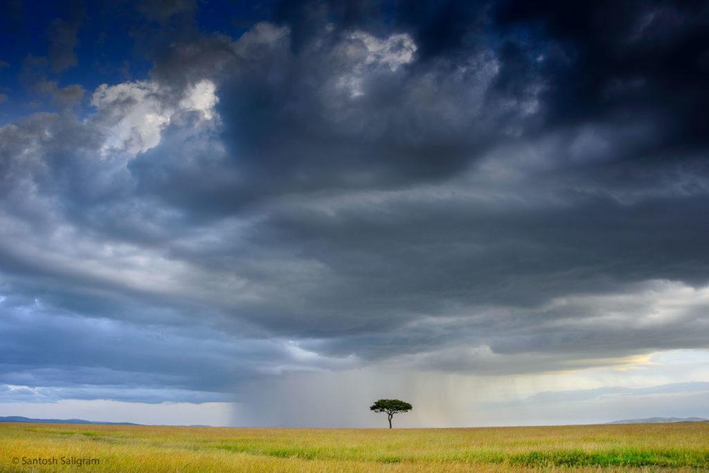 Masai Mara landscape, Santosh Saligram
