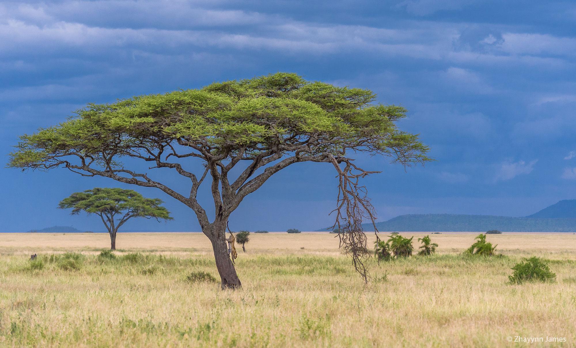 Zhayynn Africa