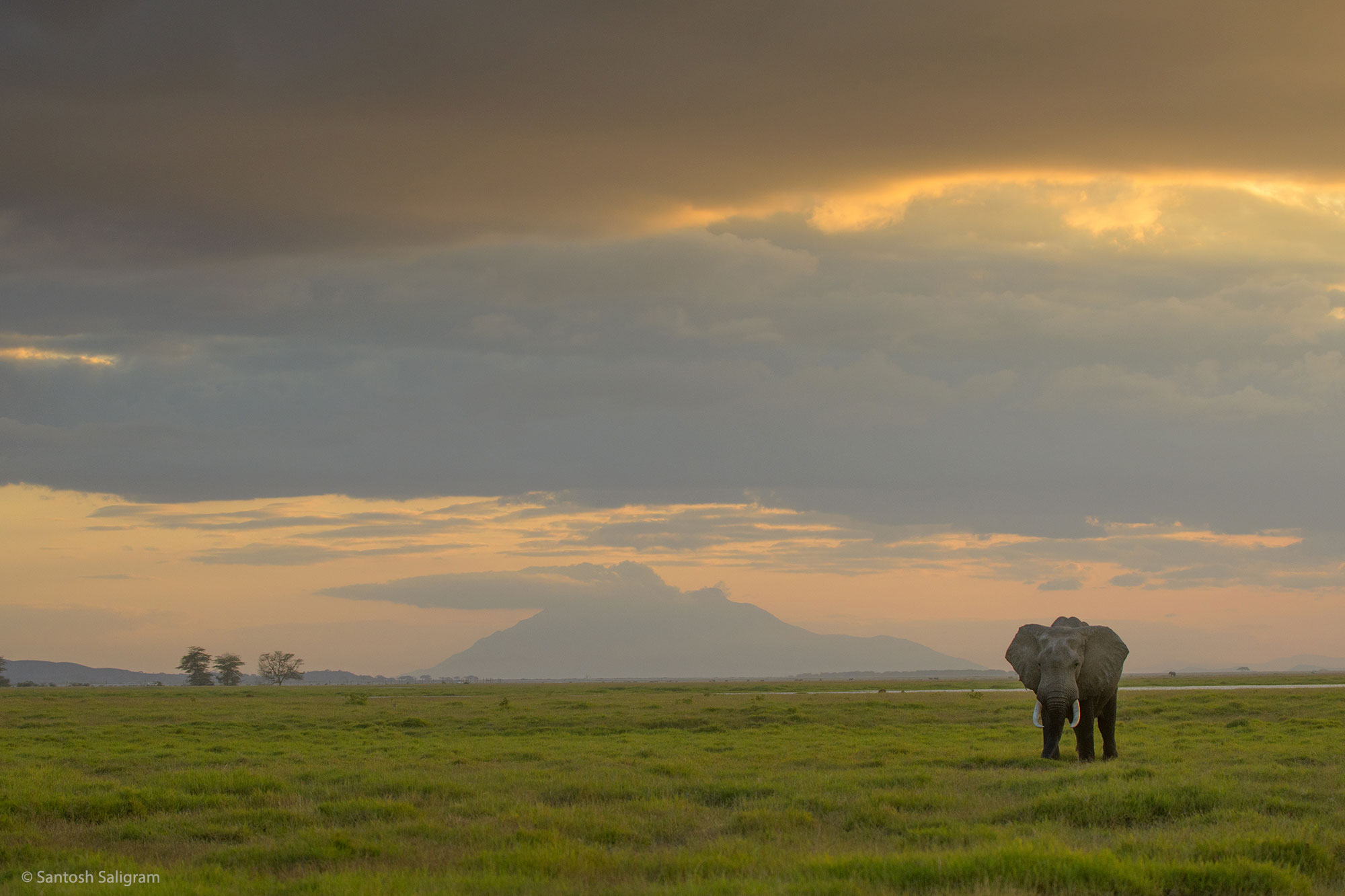 Elephant in Amboseli National Park, Kenya. By Santosh Saligram.
