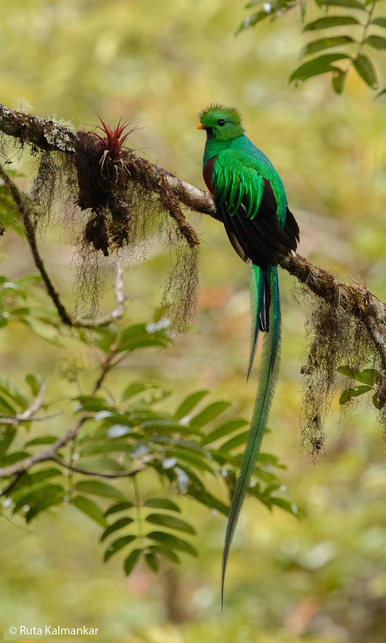 Costa Rica Ruta Kalmankar