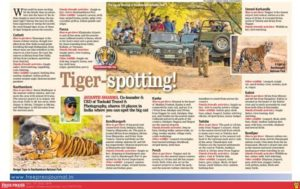 Tiger spotting