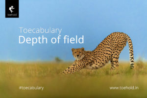 Toecabulary - Depth of field