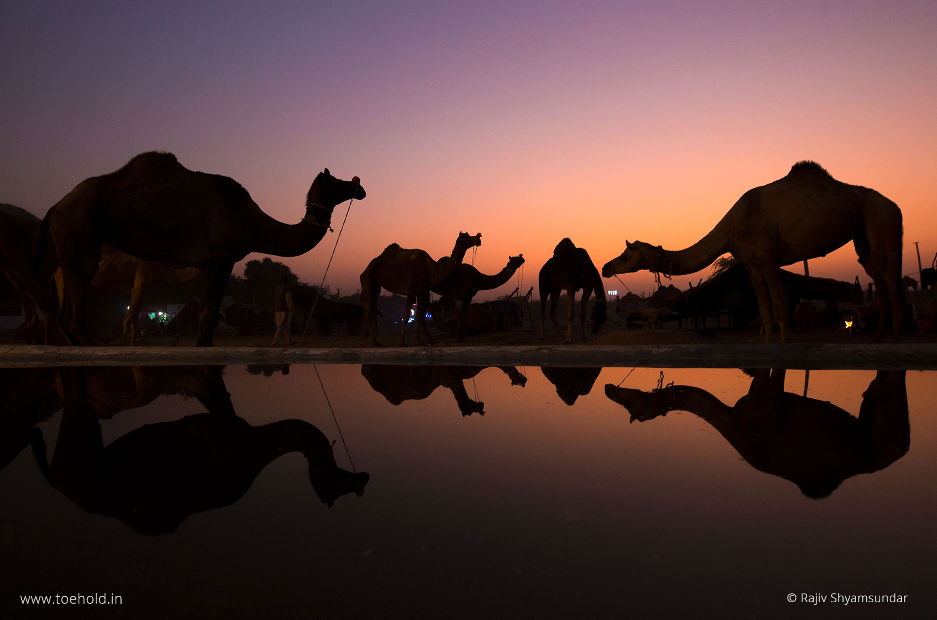 pushkar camel fair rajasthan 2021