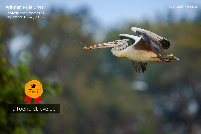 Winner - Pelican