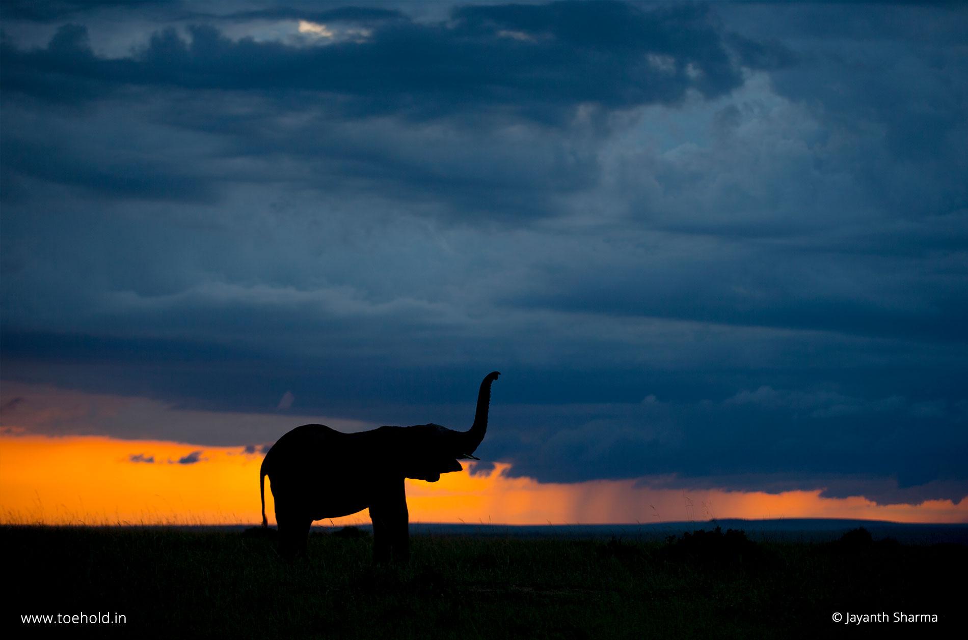 1 elephant silhouette mara 2021